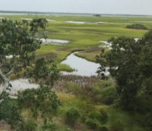 View of the marsh.