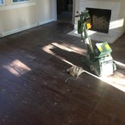 floor sander on old heart pine wood floor, prior to refinishing