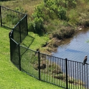 Nocatee wildlife - pair of red tail hawks